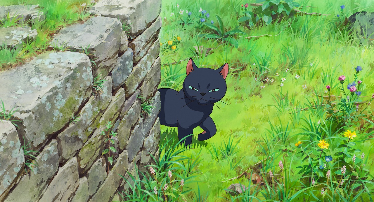 A black cat glares at the camera while standing next to a small stone wall in a grassy field.